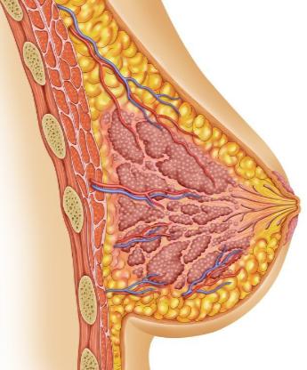Cirurgia Plástica e Aleitamento Materno